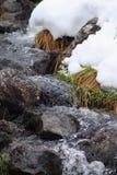 Crique d'hiver Un petit courant de montagne pendant l'hiver closeup photographie stock libre de droits