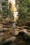 Crique dans l'automne avec les trembles #2 Image stock