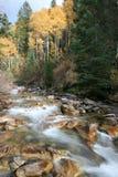 Crique dans l'automne avec les trembles #4 Photos stock