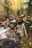 Crique dans l'automne avec les trembles #5 Photo libre de droits