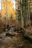Crique dans l'automne avec les trembles et la passerelle Image libre de droits