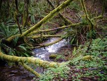 Crique dans la forêt Image libre de droits