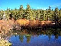 Crique dans la forêt Images libres de droits
