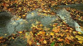Crique dans la forêt d'automne plein HD avec le glisseur motorisé 1080p clips vidéos