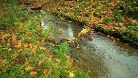 Crique dans la forêt d'automne plein HD avec le glisseur motorisé 1080p banque de vidéos