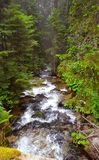 Crique dans la forêt de pin dans les collines Bulgarie de Rila image stock
