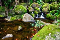 Crique dans la jungle d'Hawaï Image stock