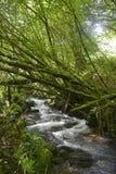 Crique dans la nature verte Image libre de droits