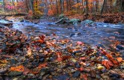 Crique dans la saison d'automne Photos stock
