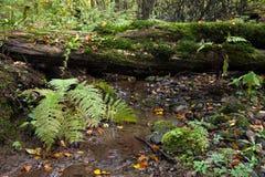 Crique dans les bois Photo stock