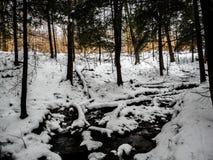 Crique dans les bois pendant l'hiver Image stock