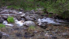 Crique de abondance de montagne d'une montagne de Pyrénées en Espagne, longueur de mouvement lent clips vidéos