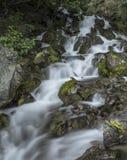 Crique de cascade Photo stock
