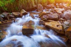 Crique de courant de montagne dans les pierres et banques d'herbe verte dans la for?t de montagne photo stock