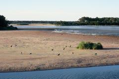 Crique de cygnes - Chincoteaque, la Virginie Photographie stock libre de droits