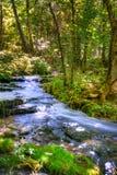 Crique de forêt Image libre de droits