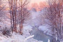 Crique de forêt dans la forêt d'hiver photographie stock