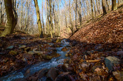 Crique de forêt en premier ressort photo stock