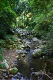 Crique de forêt humide image stock