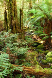 Crique de forêt humide Photos libres de droits