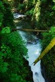 Crique de forêt humide Photo stock