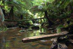 Crique de forêt tropicale Photo libre de droits