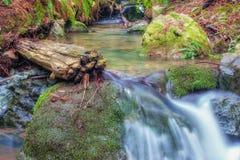 Crique de forêt Images libres de droits