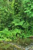 Crique de jungle Photographie stock libre de droits