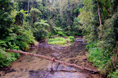 Crique de jungle Photos stock