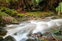 Crique de l'eau dans la forêt de la Tasmanie Image stock