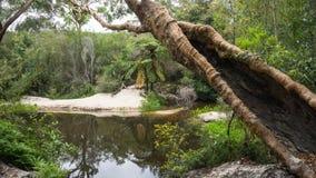 Crique de Mccars, chasse Nationalpark, Australie de Ku-anneau-Gai Image libre de droits