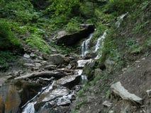 Crique de montagne dans la forêt carpathienne image stock