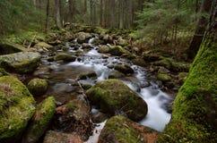 Crique de montagne en parc national Images stock