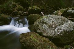Crique de montagne en parc national Images libres de droits