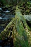 Crique de montagne en parc national Image stock