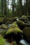 Crique de montagne en parc national Photo libre de droits