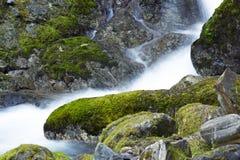 Crique de région sauvage de forêt Photos stock