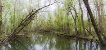 Crique de ressort en parc d'étang de Toogood Images stock