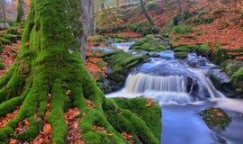 Crique de rivière de CLoghrea, comté Wicklow, Irlande photographie stock libre de droits
