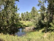Crique de rivière de Highwood, Alberta du sud, Canada images libres de droits