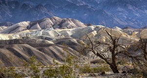 Crique Death Valley de four Photos stock