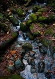 Crique du nord de rivage et roches moussues Photographie stock libre de droits