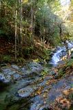 Crique en automne Photo stock