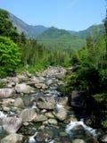 crique en bambou Images stock