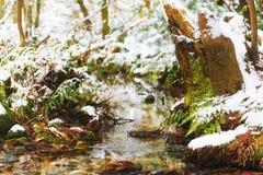 Crique en forêt de l'hiver Images libres de droits
