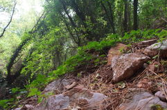 Crique en pierre dans les bois, le lierre, traînée de forêt images stock
