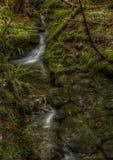 Crique ensoleillée de buisson Photo stock