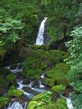 Crique ensoleillée de buisson Photos stock