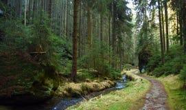 Crique et chemin en parc national Image libre de droits
