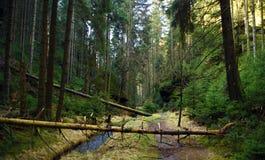 Crique et chemin en parc national Photo libre de droits